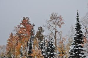 Rocky Mtn Autumn Snows