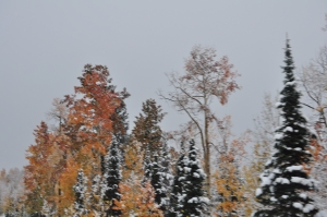 Rocky Mtn Autumn Snows